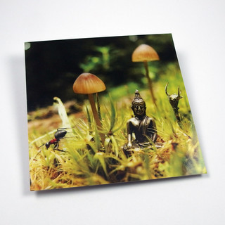 5er-Postkartenset - Little Buddhas World